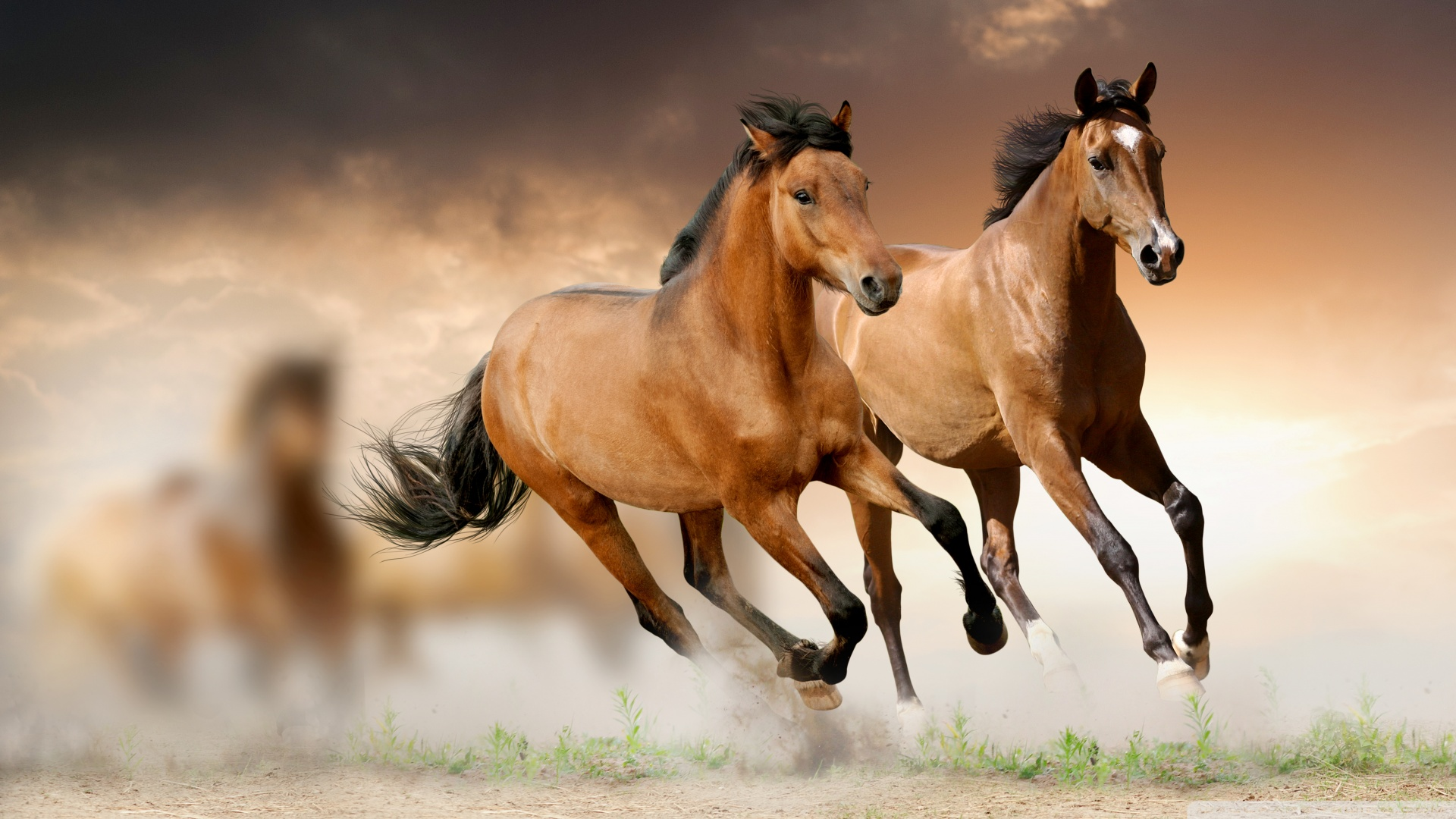 horses-14852-15511-hd-wallpapers